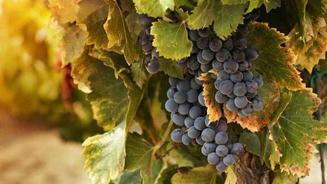 colorado wine tour